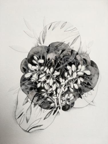 Ghost Crassula Ovata, Ink, watercolor, vellum, 2018